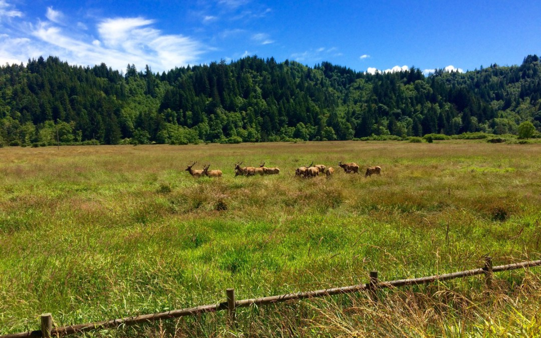 Exploring Oregon: All of the Trees and None of the People