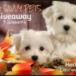 Enter The Savvy Pets Giveaway (3 Winners) Picked After November 22